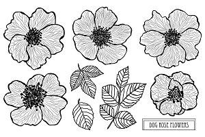 Dog Rose Flowers Set
