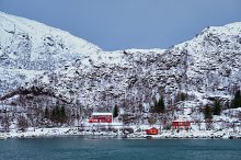 Red rorbu houses in Norway in winter by  in Nature