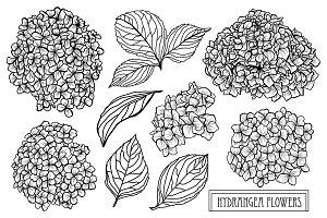 Hydrangea Flowers Set