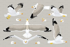 ♥ vector seagull sea gull set