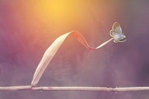 Butterflies, Butterfly