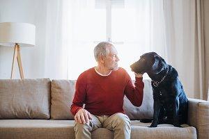 A senior man sitting on a sofa