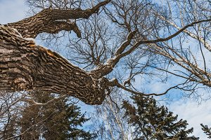 An beautiful old fantastic branchy