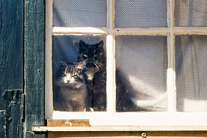 Two cats looking through vintage win
