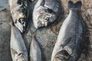 Raw fish. Sea bream, sea bass, macke