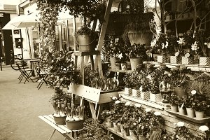 Parisian street. Flowers shop. Sepia