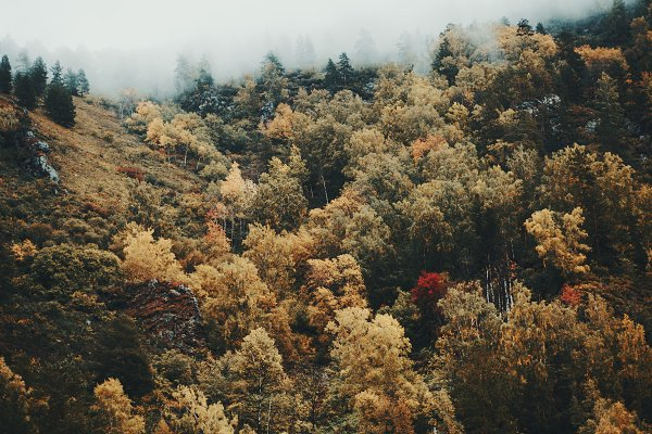 Nature Stock Photos: SkyNext - Aerial view of a foggy autumn forest