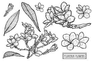PLumeria Flowers Set