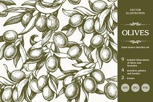 Hand drawn sketch olives set