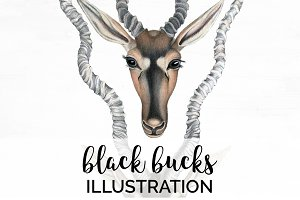 Deer Vintage Black Bucks Antlers