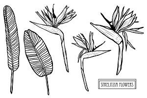 Strelitzia Flowers Set