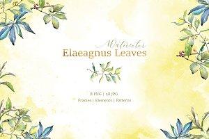 Elaeagnus leaves Watercolor png