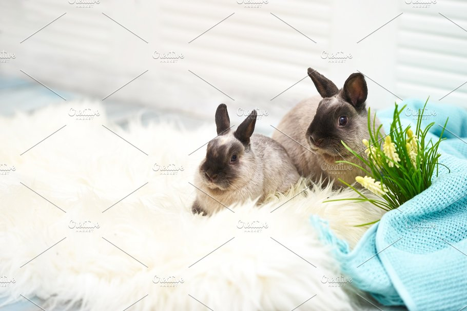 Two Rabbits In Easter Decorations Animal Photos Creative Market