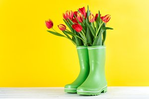 Red tulips in rubber boots