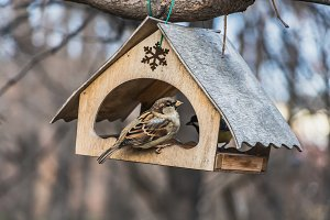 Two birds one gray and brown sparrow