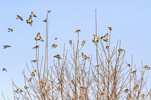 colored flock of birds sits on tree