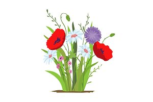 Flowerbed. Flower red poppy. Set of