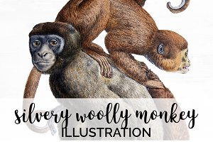 Monkey Silvery Wooly Monkeys Vintage