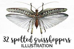 Grasshopper 32 Spotted Vintage Bugs