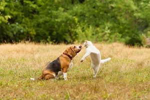 Close view of cat and dog fighting