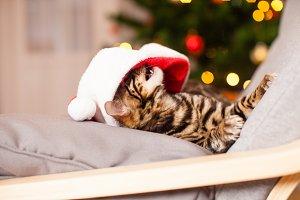 Small bengal kitten play with Santa