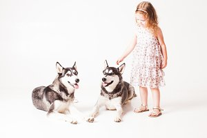 Two brothers huskies and girl