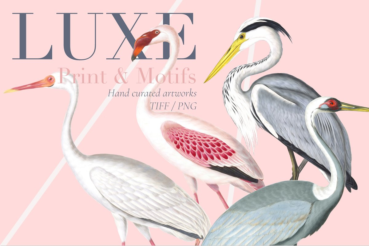 Luxe, Glamour and More!