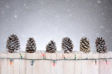 Pine Cones on Fence in Snow