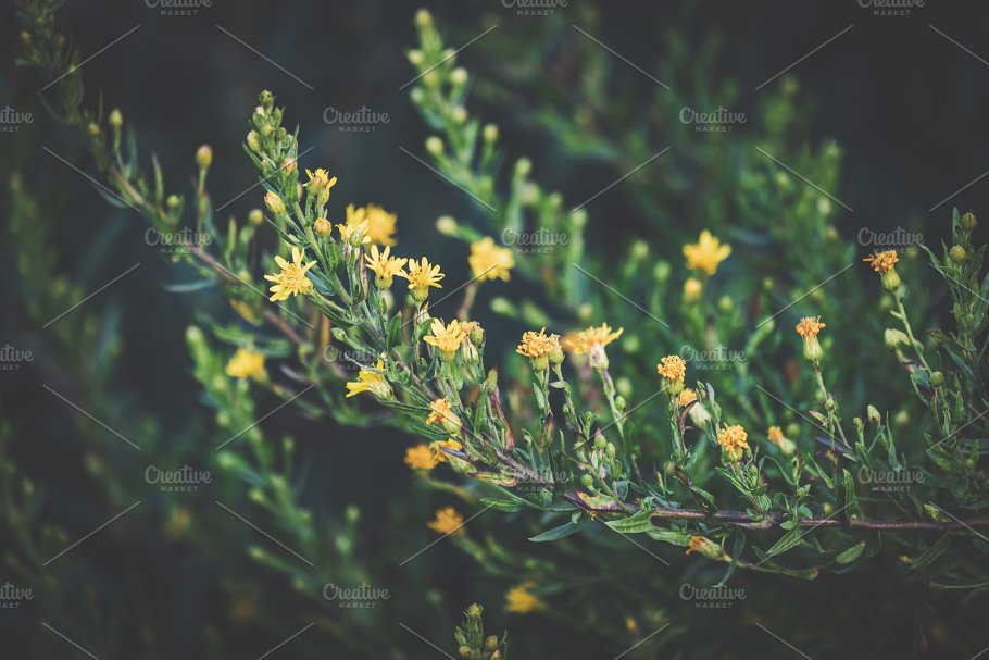 Branches With Yellow Flowers Nature Photos Creative Market