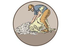 Farmworker Shearing Sheep Circle Etc