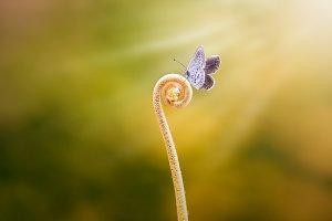 butterflies above flowers