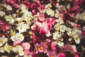 Summer flowers #19