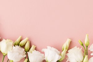 White roses on pink background
