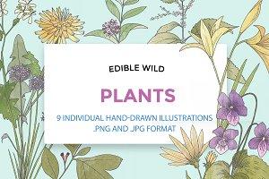 Hand Drawn Edible Flowers
