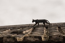 Cat stalking on roof of Tulou at by  in Architecture