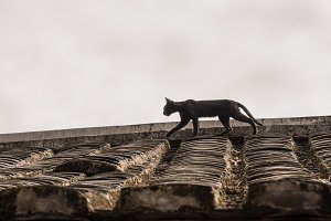 Cat stalking on roof of Tulou at
