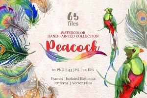 Peacock Watercolor png