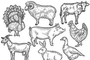 Farm animal set illustration