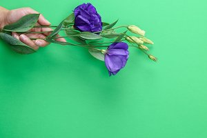 hand  holding a branch of a  flower