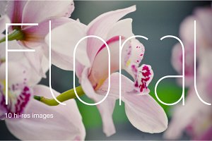 Floral - BIG photo pack of 10