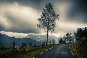 Winter tree near the road