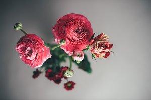 Beautiful red pink flowers in vase