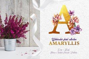 Amaryllis Watercolor png