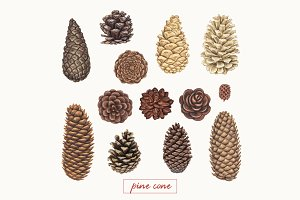 Pine cones and branches