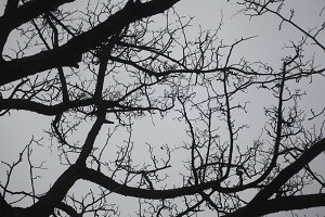 Bare Tree against Cloudy Winter Sky