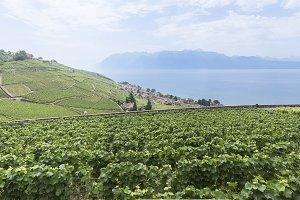 Vineyards on Switzerland