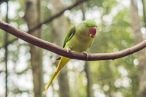 Big beautiful parrot sitting on a