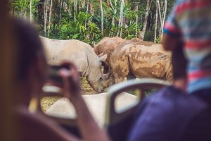 Tourists watch the animals from the