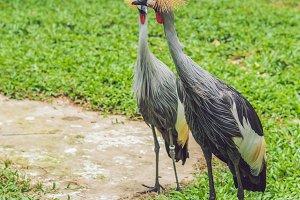 Wildlife and rainforest exotic