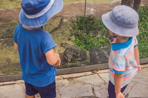 Boys watching reptiles in the